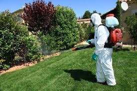 pulgas en jardin